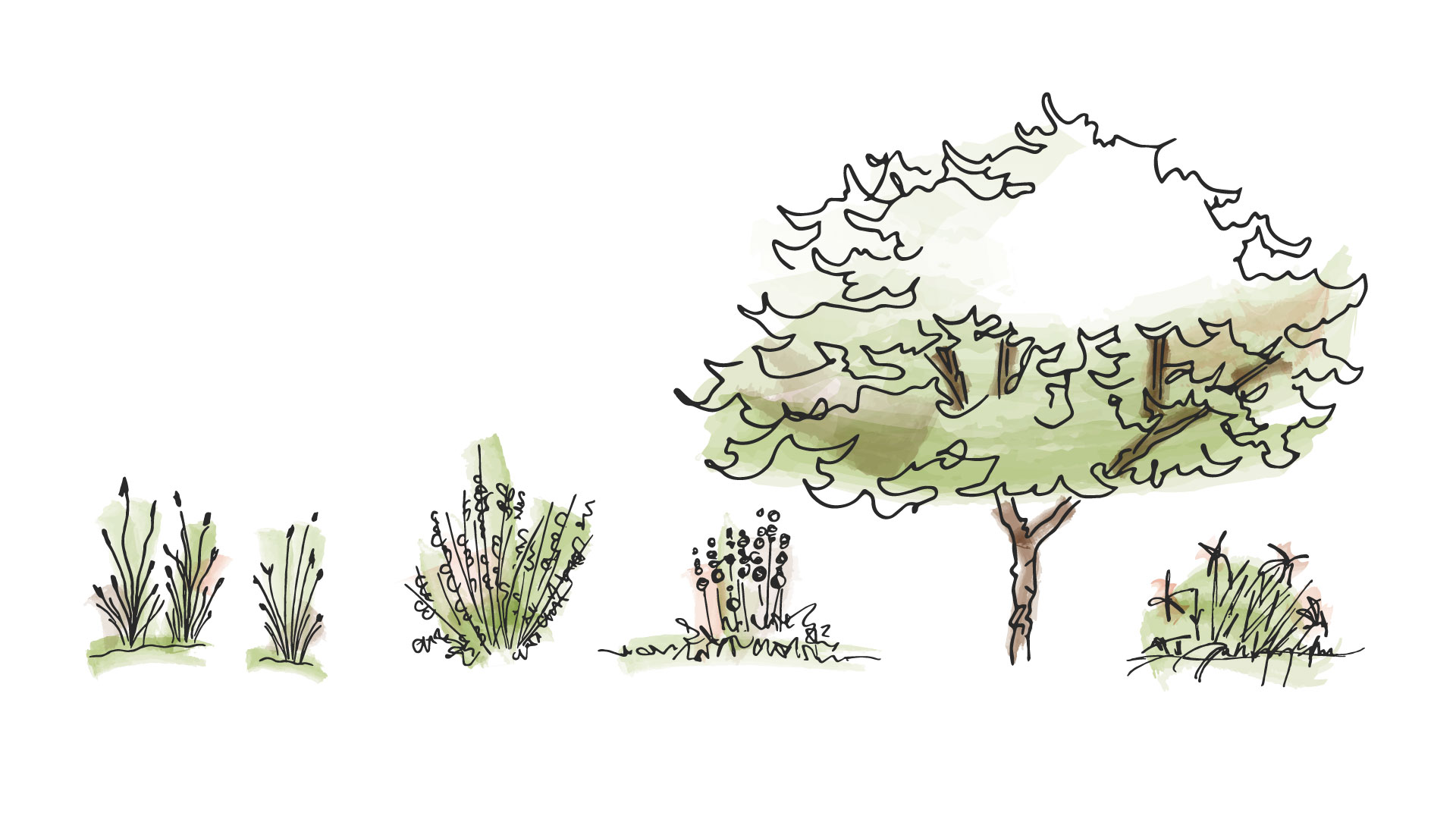 Sketches of greenery, trees, and shrubs with touches of green and tan to resemble architectural shading